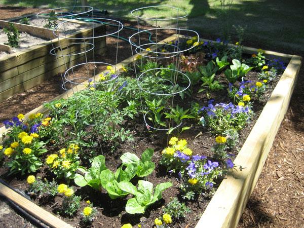 June-garden-3