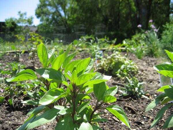 June-garden-4